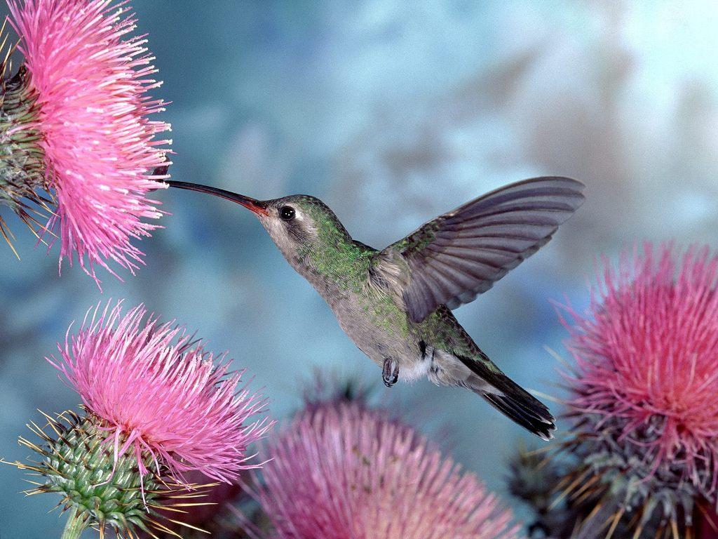 Florida Lady Bird Enhanced Life Estate Deed
